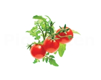 Click and Grow Smart Garden Refill 3-pack - mini tomater